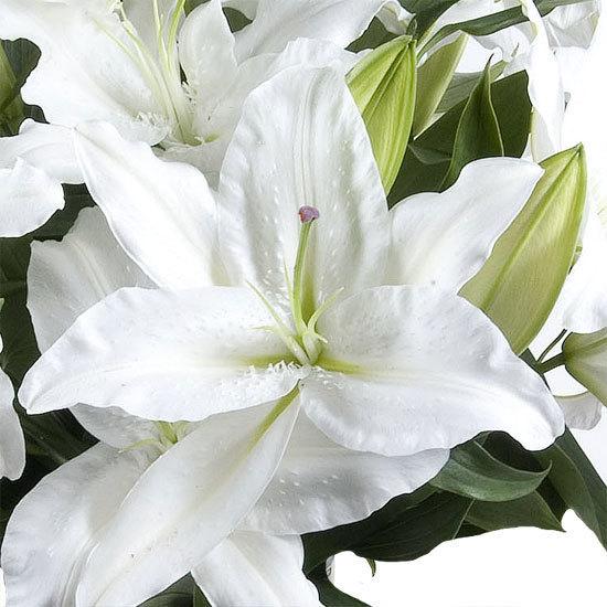 witte-geparfumeerde-lelies-_-aquarelle-be-550x550-30629-1