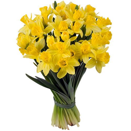 Заказ цветов с доставкой нарциссы, цветы