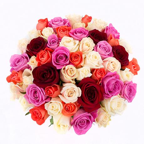 51-rose